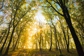 Free Autumn Sun In The Branches Of A Tree Royalty Free Stock Image - 16455066
