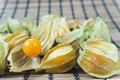 Free Physalis Royalty Free Stock Photo - 16458465