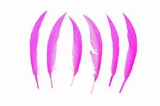 Free Colorful Bird Feather Royalty Free Stock Photo - 16450505