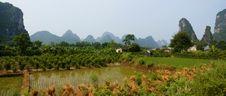 Free Panoramic Landscape Of Yangshou Royalty Free Stock Photography - 16450527