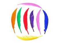 Free Colorful Bird Feather Stock Photo - 16450650
