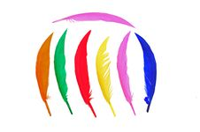 Free Colorful Bird Feather Stock Photos - 16450673