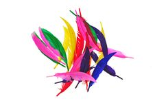 Colorful Bird Feather Royalty Free Stock Photos