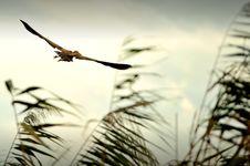 Free Flying Danube Delta Bird Stock Photos - 16450953
