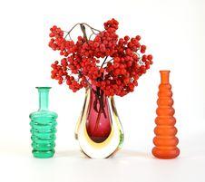 Red Natural Rowan Royalty Free Stock Image