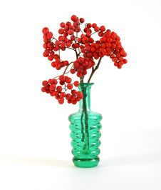 Free Red Natural Rowan Royalty Free Stock Photography - 16451157