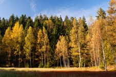 Trees During The Autumn Royalty Free Stock Photo
