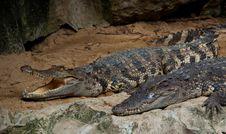 Free Crocodile Royalty Free Stock Photo - 16452415