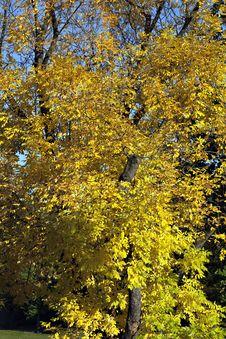 Free Colorful Autumn Tree Stock Photo - 16452450