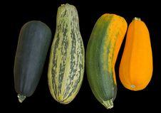 Free Vegetable Marrows 13 Stock Photo - 16452460
