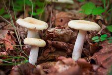 Free Mushroom Trio Royalty Free Stock Image - 16454746