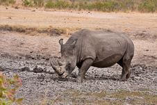 Free African White Rhinoceros Stock Photo - 16455470