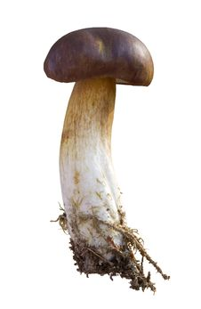 Free Edible Mushrooms Stock Photos - 16457833