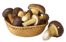 Free Edible Mushrooms Royalty Free Stock Image - 16458006