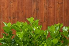 Free Garden Wall Stock Images - 16458074