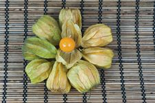 Free Physalis Royalty Free Stock Photography - 16458507
