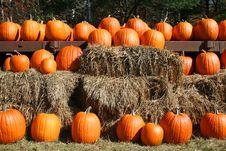 Orange Pumpkins In Rows On Hay Bales Stock Images