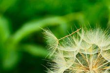 Free Dandelion Close Up Stock Images - 16458634