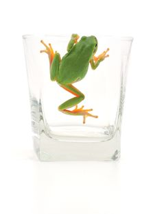 Free Frog In Glassful Stock Photos - 16459393