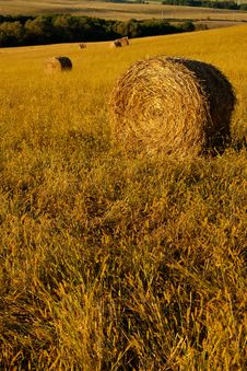Roll Of Hay Stock Image