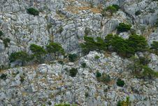 Free Pine On The Cliff Stock Images - 16459774
