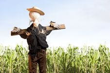 Free Scarecrow In Corn Field On A Sunny Day Stock Photos - 16459943