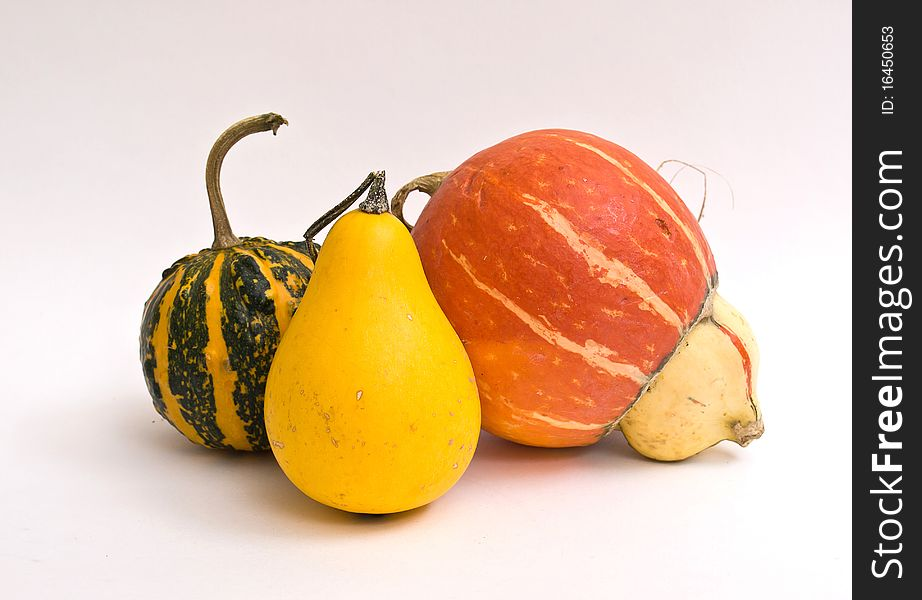Mini Pumpkins Isolated