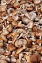 Free Small Mushroom Royalty Free Stock Photos - 16462548