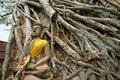 Free Buddha And Tree Stock Image - 16462931