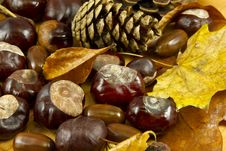 Free Fruits Of Fall Royalty Free Stock Image - 16460156