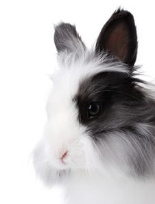 Free Rabbit Portrait Royalty Free Stock Images - 16460179