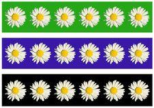 Free White Daisy Stock Image - 16460311