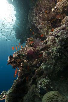 Free Fish And Ocean Stock Photos - 16460343