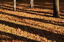 Free Tree Shadow Royalty Free Stock Photos - 16460658