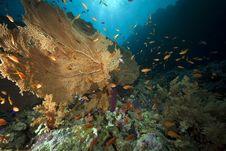 Seafan And Ocean Stock Photos