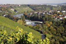 Free Vineyard And River Neckar Stock Photo - 16460900