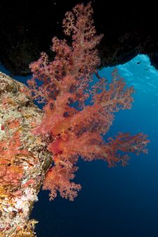 Free Coral And Ocean Stock Photo - 16461090