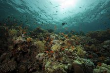 Free Underwater Scenery At Yolanda Reef Royalty Free Stock Photography - 16461347