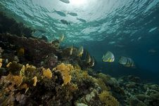 Free Underwater Scenery At Yolanda Reef Stock Photos - 16461383