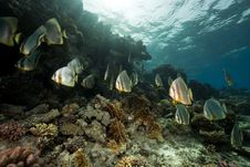 Free Underwater Scenery At Yolanda Reef Stock Photos - 16461473