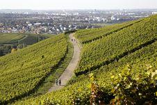 Free Vineyard In Autumn Stock Photography - 16461502