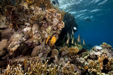Free Underwater Scenery At Yolanda Reef Stock Images - 16461504