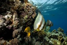 Free Underwater Scenery At Yolanda Reef Royalty Free Stock Photos - 16461528