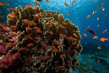 Free Underwater Scenery At Yolanda Reef Stock Photo - 16461650