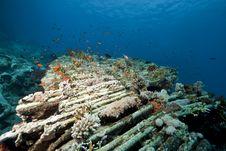 Cargo Of The Yolanda Wreck Royalty Free Stock Image