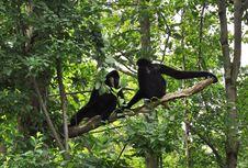 Free Monkey Talk. Stock Images - 16461804
