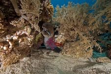 Giant Moray And Ocean Royalty Free Stock Images