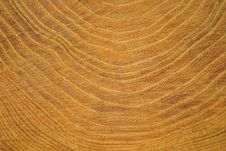 Free Cut Of Tree Stock Photo - 16462000