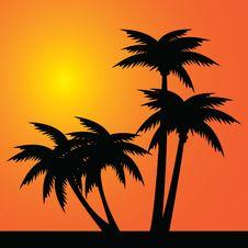 Free Palms Stock Photo - 16463820