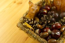 Free Fruits Of Fall Stock Image - 16465991